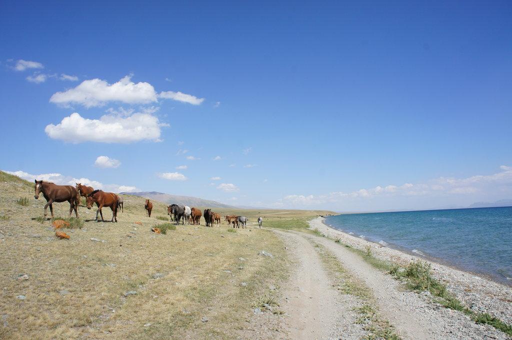 Kone pri Song-Kul