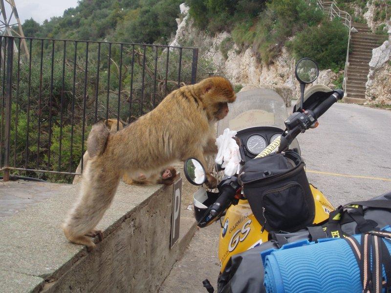 MDA 2008 - Gibraltar