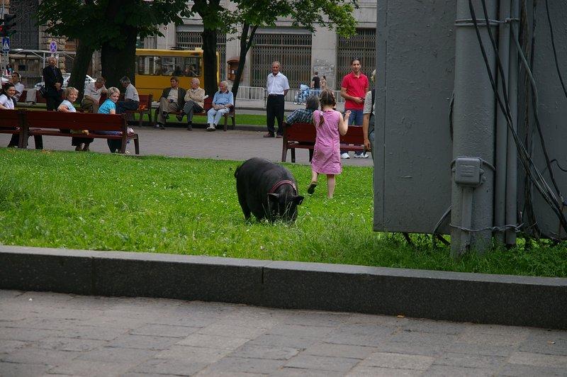 Ukrajina - mesto Ľvov niekto si venči psa, niekto prasa