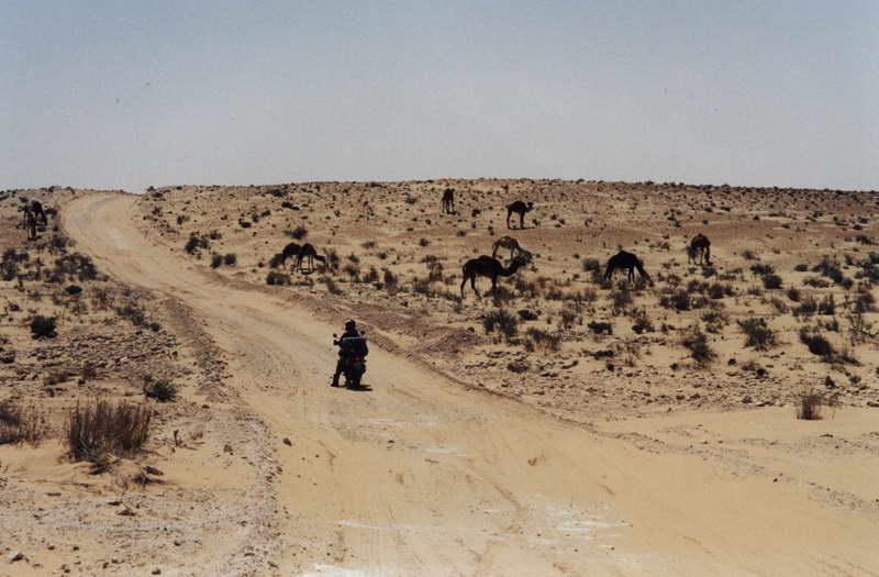 Sami v sahare