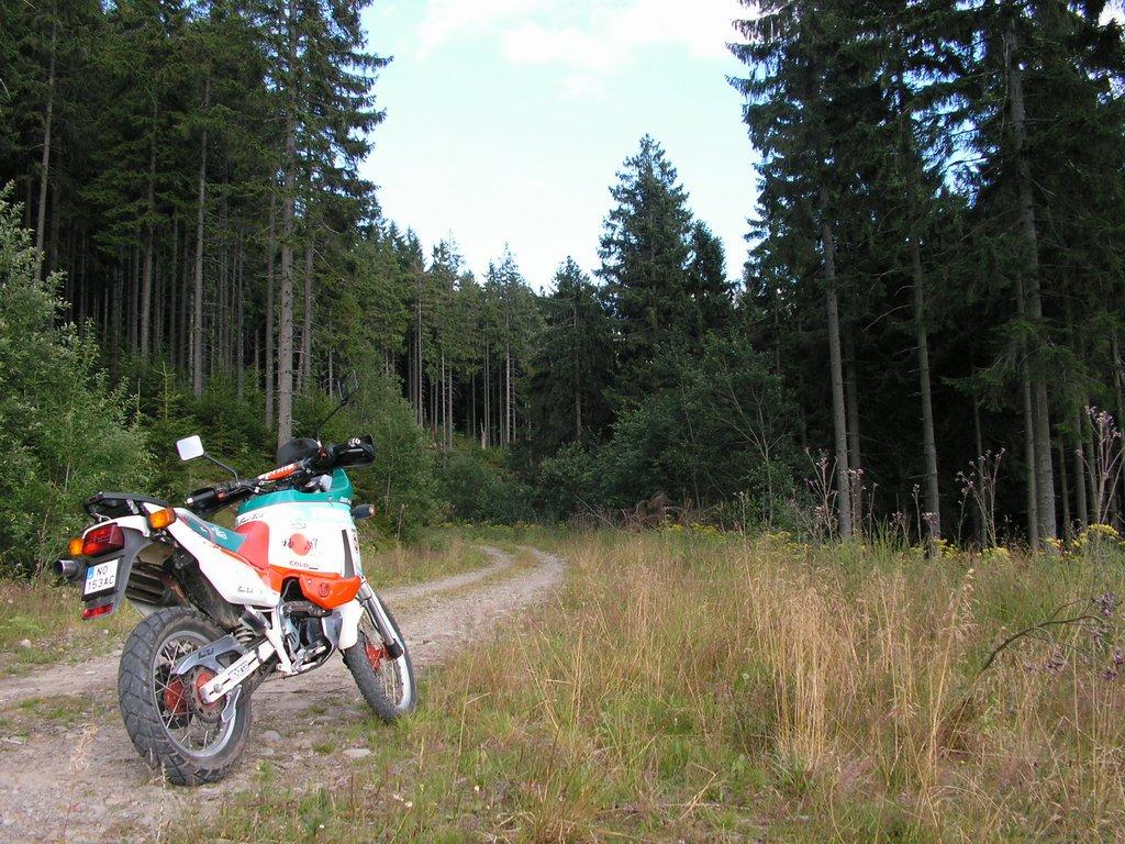 Na lesnej ceste
