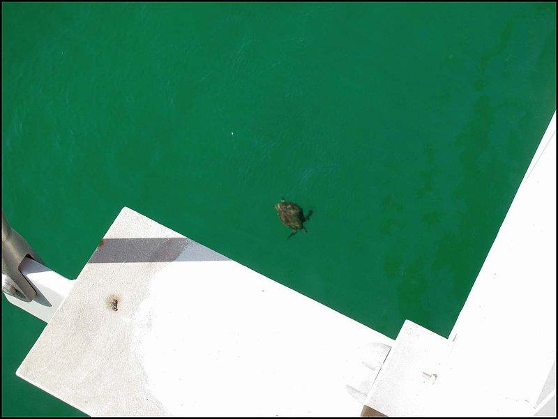 ...pod ktorým sme videli túto plávajúcu korytnačku. Okrem stavby lodí je Sur známe tým, že na jeho plážach tieto obrovské korytnačky kladú vajcia.